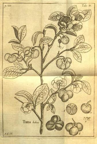 Teplanta Linné