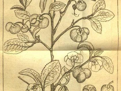 Gratta Linné med trädgårdsfest!