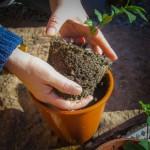 teplantor omplantering 2