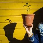 teplantor omplantering 7